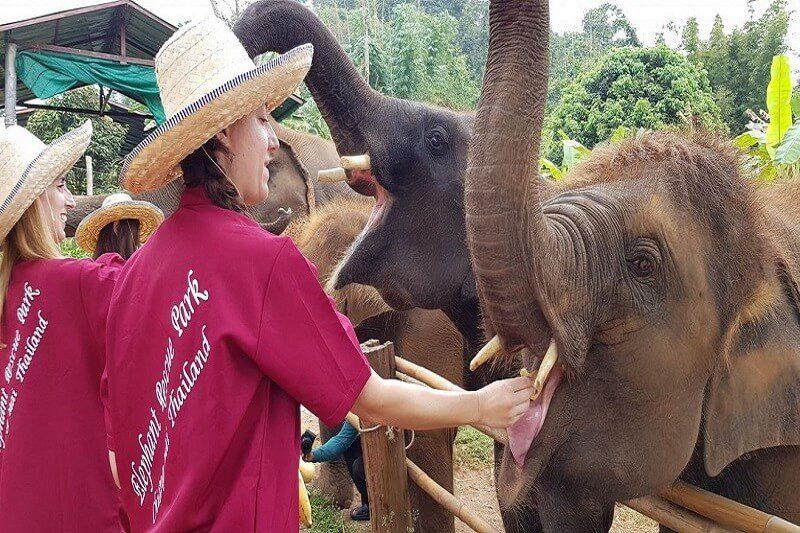 elephant tour chiang mai_serene boutique elephant care_1