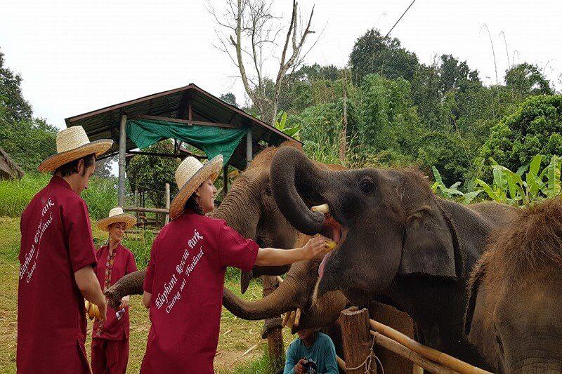elephant tour chiang mai_serene boutique elephant care_11
