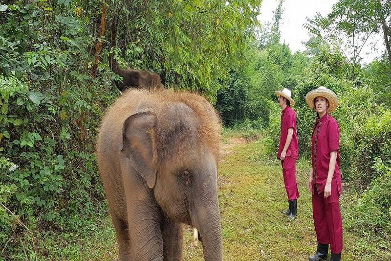 elephant tour chiang mai_serene boutique elephant care_12