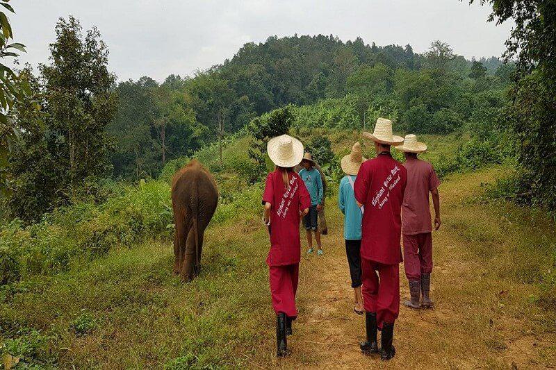elephant tour chiang mai_serene boutique elephant care_16