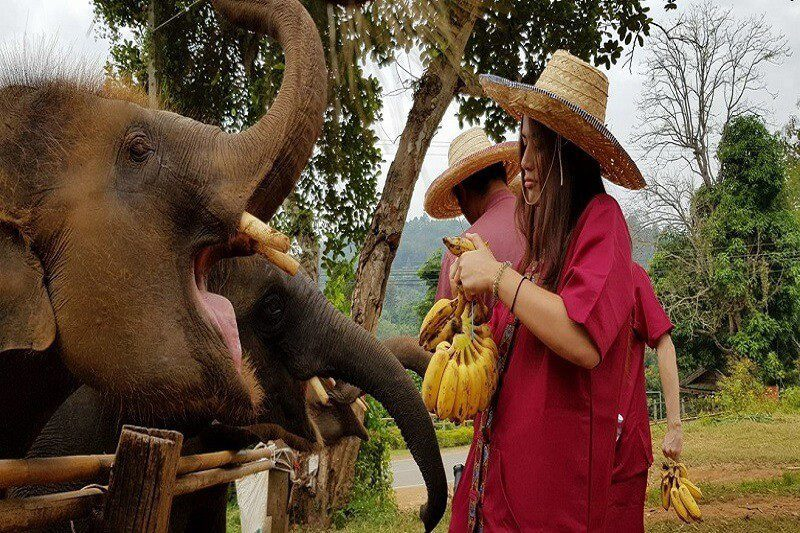 elephant tour chiang mai_serene boutique elephant care_2