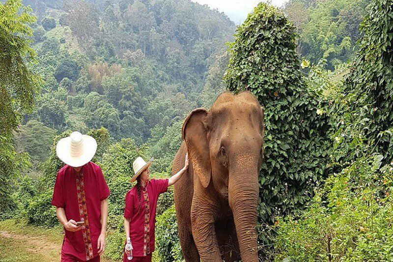 elephant tour chiang mai_serene boutique elephant care_4