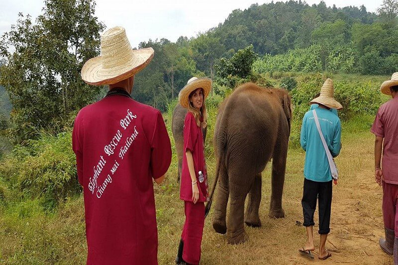 elephant tour chiang mai_serene boutique elephant care_8