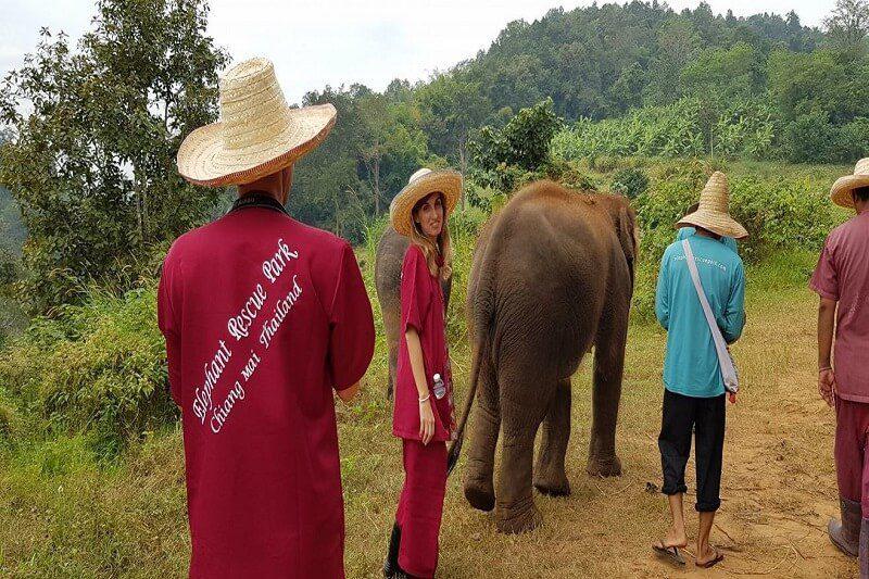 elephant tour chiang mai_serene boutique elephant care_8