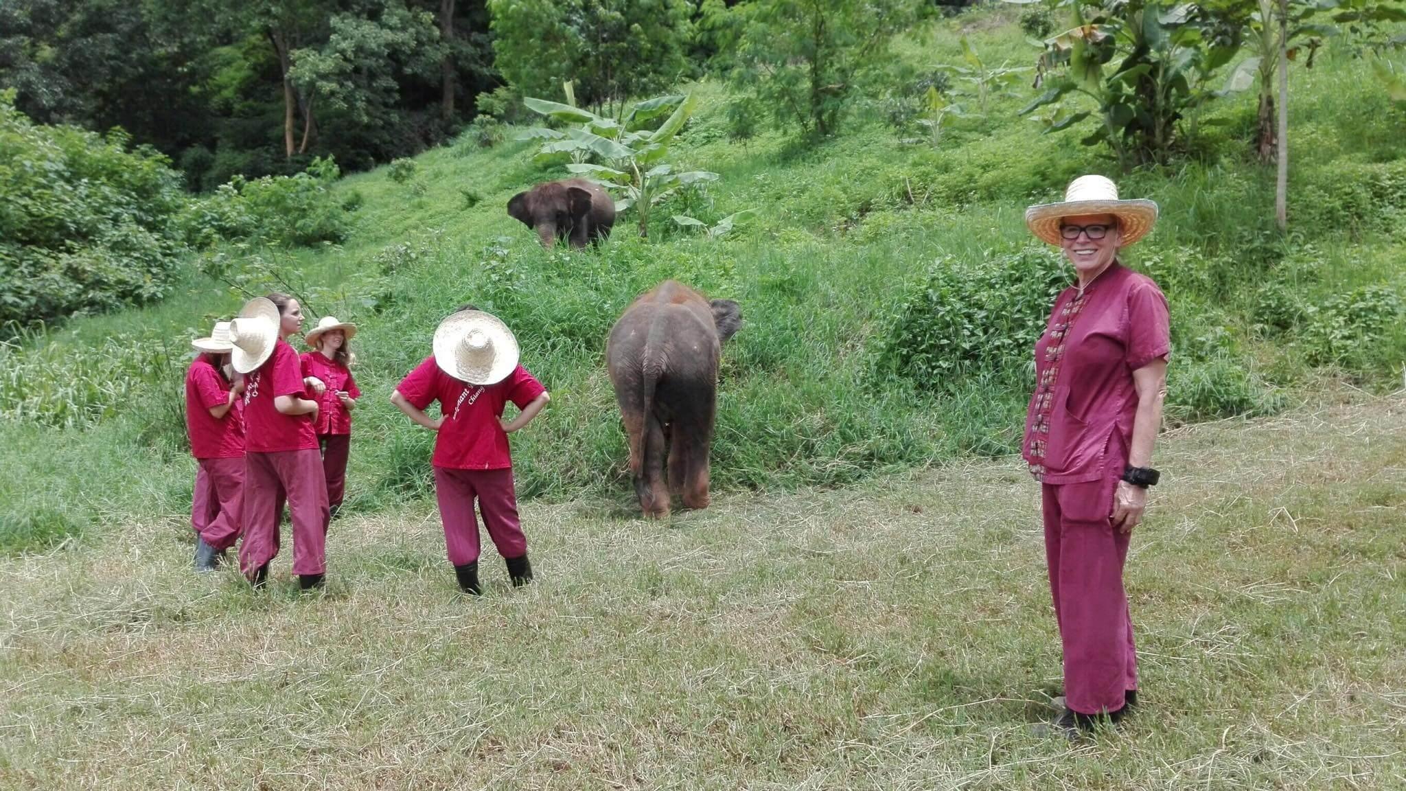 half day elephant sanctuary chiang mai