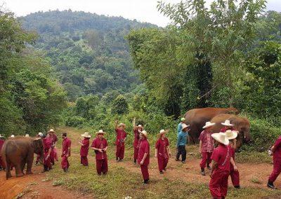 half day elephant sanctuary chiang mai_11