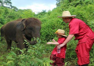 half day elephant sanctuary chiang mai_14
