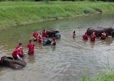 half day elephant sanctuary chiang mai_3