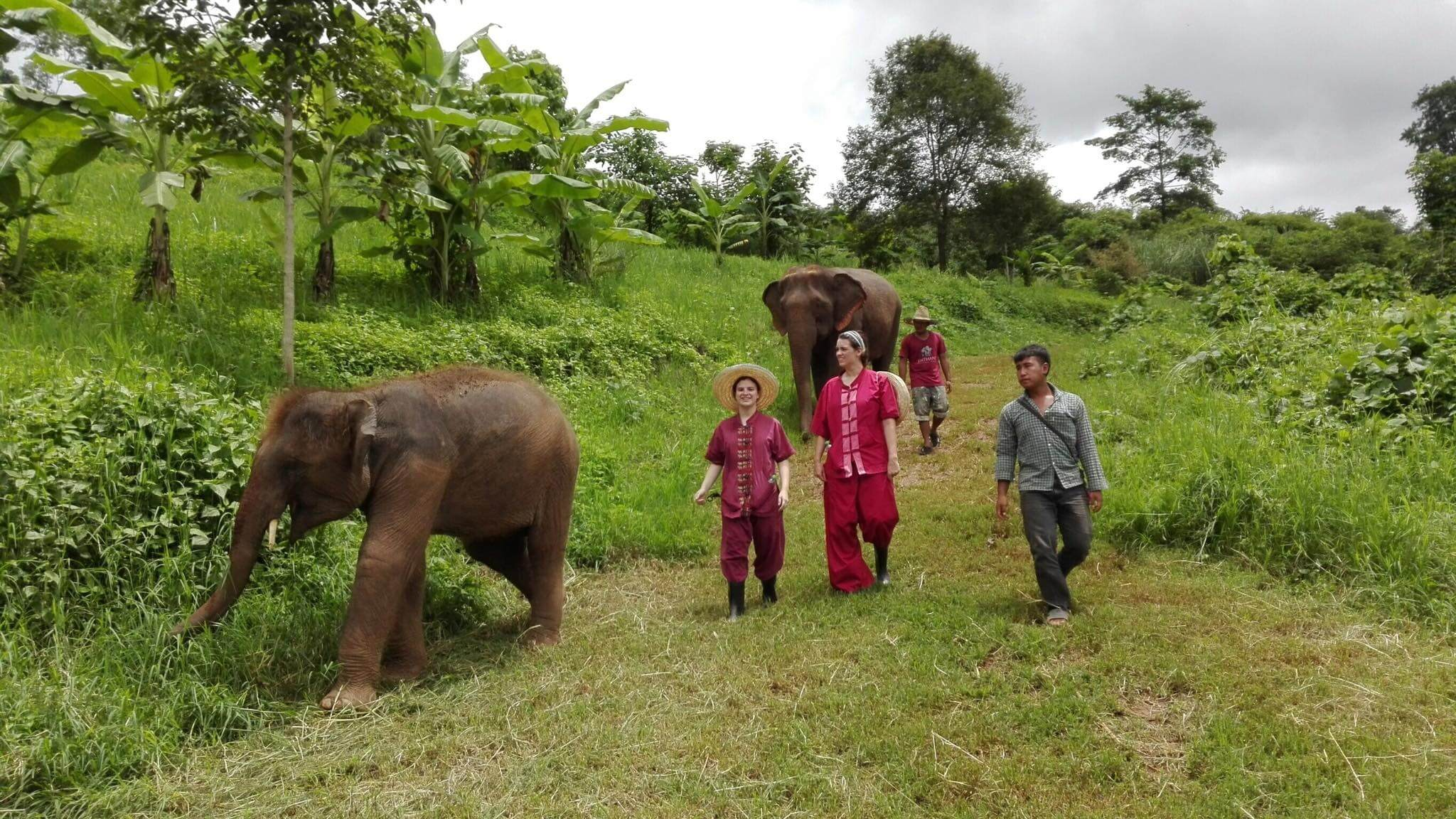 half day elephant sanctuary chiang mai_5