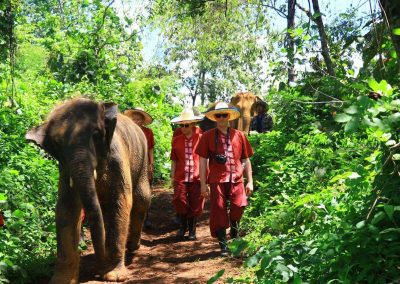 Elephant Rescue Park_customer_walking_elephants