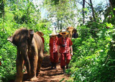 Elephant Rescue Park_customer_walking_elephants