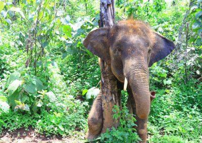 Elephant Rescue Park_free 1