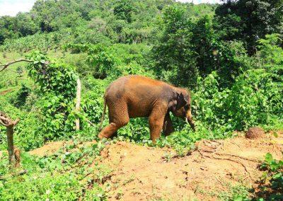 Elephant Rescue Park_free