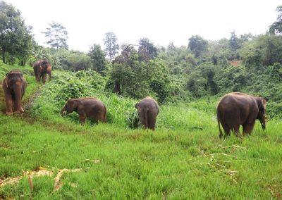 Elephant Rescue Park_roaming_free