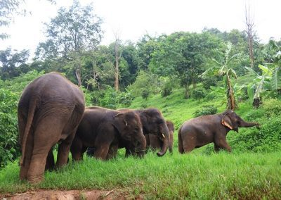 Elephant Rescue Park_roaming_free_1