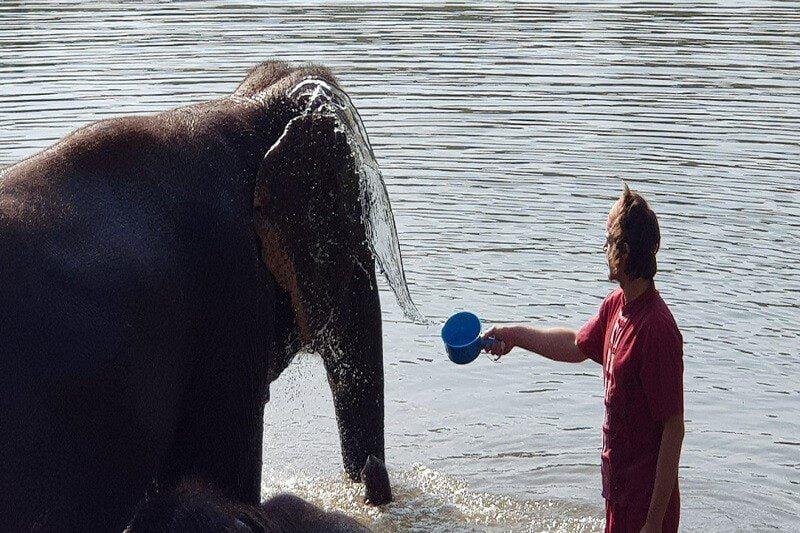 Overnight Elephant Care_4